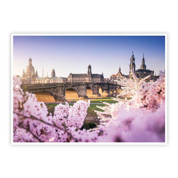 Ansichtskarte Dresden - Dresdner Altstadt mit Kirschbaumblüte